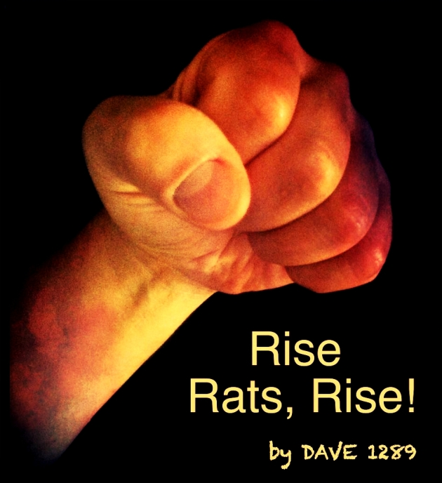 Rise Rats, Rise! Cover Image